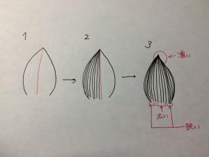 葉脈 描き方