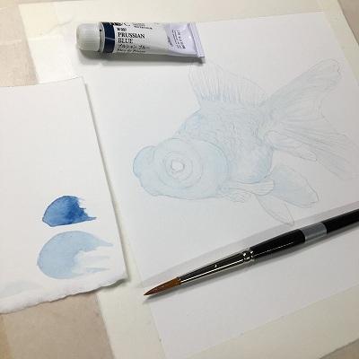 金魚 ウォッシュ