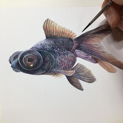 水彩画 金魚